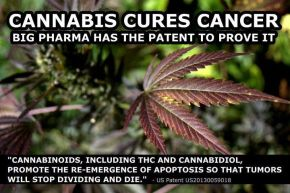 Medical Cannabis is being used in treatment of a variety of illnesses